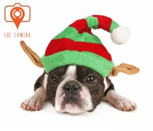 dog-in-elf-hat