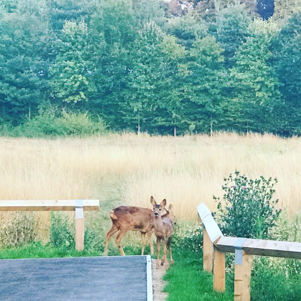 The deer on mydoorstep