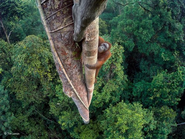 Last chance to catch Wildlife Photographer of the Year inSouthampton