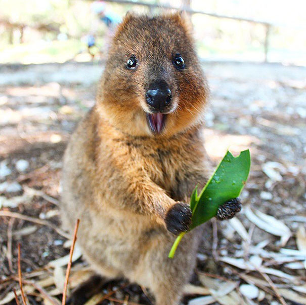 Rottnest Birthday quokka fun