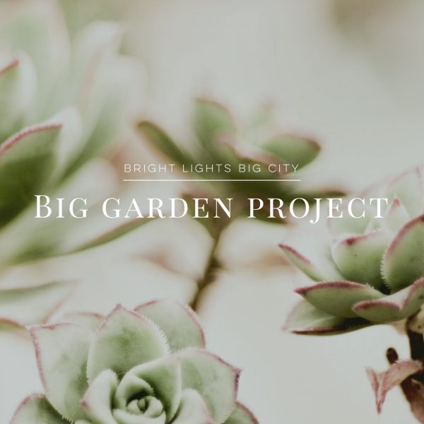 Our big garden project