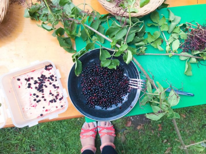 Wild Kitchen & Autumn Foraging at Lydford Gorge in Devon