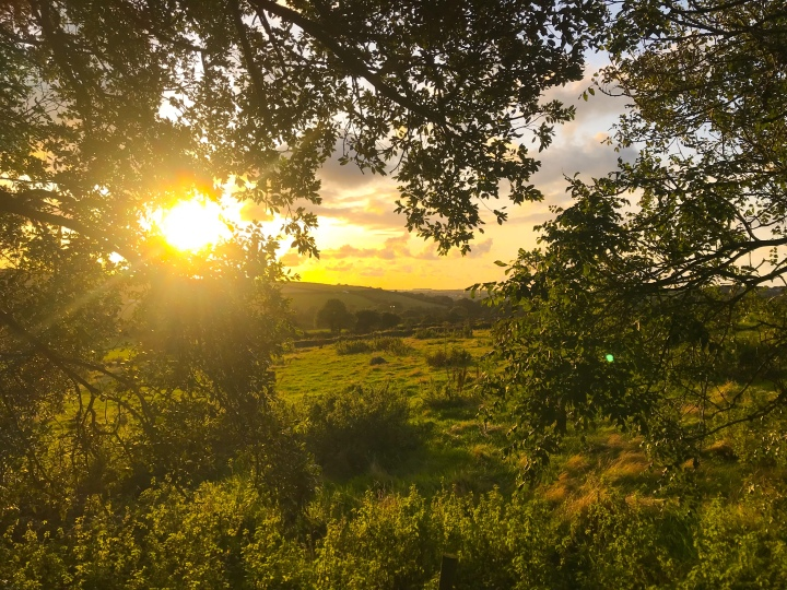 A golden sunset over the rolling Cornish hillside, it's very green and the outlook is through some trees out across the hills.